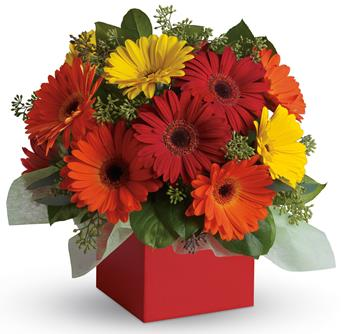 Description: Brighten their day with this exuberant burst of beauty! Joyful gerberas make everyone smile.