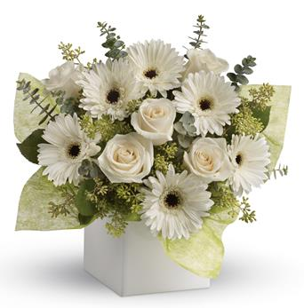 Description: Send serenity with this artful arrangement of pure white roses and gerberas.