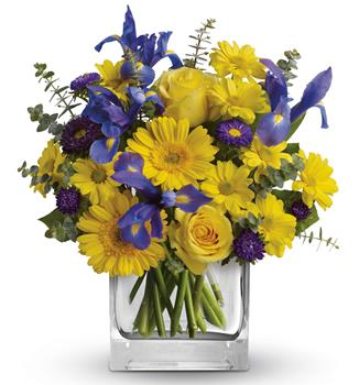 Description: As invigorating as a cool summer breeze, this amazing arrangement pairs eye-catching iris with golden gerberas and roses for a sunny-day sensation.