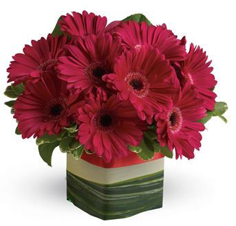 Description: Make a singular statement with this hot pink presentation of everyones favourite gerbera!