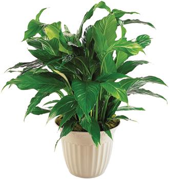 Green house plant pictures