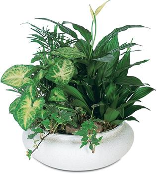 Description: This beautiful gift is a garden of delights. Perfectly at home inside a home or office, it is a great gift for all reasons and seasons.