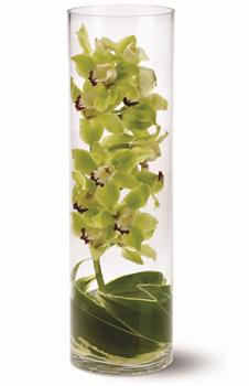 Description: Tall green cymbidium orchid stem - swathed in ti leaves and presented in a clear glass cylinder.