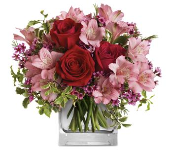 Description: Make her blush with the beautifully blushing blooms of this romantic arrangement. Arranged inside a glass cube that catches the light and radiates your love, it is a heartfelt gift she will always remember!