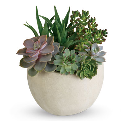 Description: Bring the serene beauty of the desert landscape to any room of the house or office with this glorious growing gift.